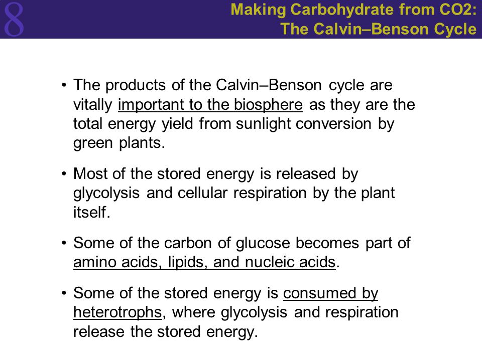 8 Making Carbohydrate from CO2: The Calvin–Benson Cycle The products of the Calvin–Benson cycle are vitally important to the biosphere as they are the total energy yield from sunlight conversion by green plants.