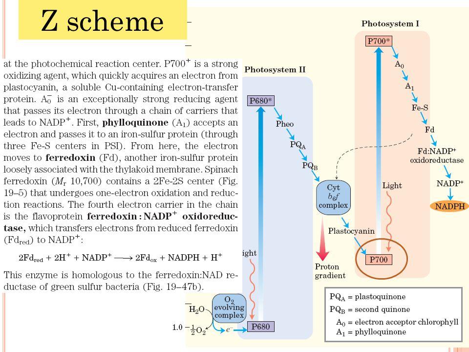 Z scheme 22