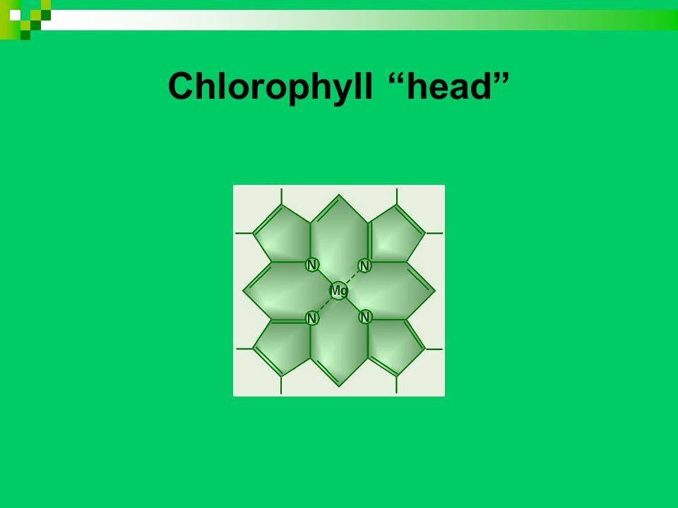 Chlorophyll head