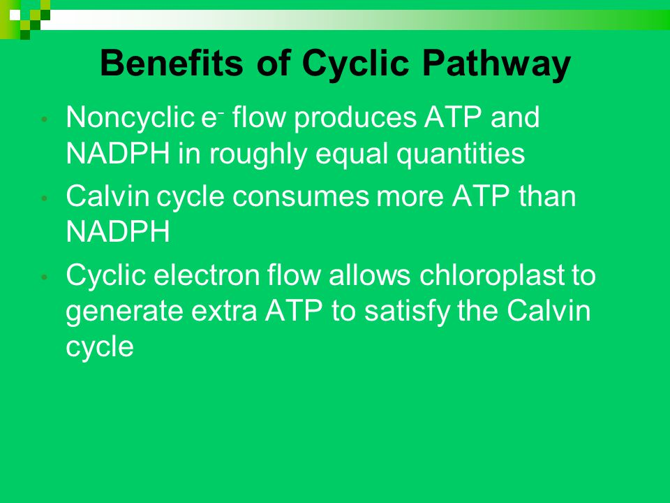 Benefits of Cyclic Pathway Noncyclic e - flow produces ATP and NADPH in roughly equal quantities Calvin cycle consumes more ATP than NADPH Cyclic electron flow allows chloroplast to generate extra ATP to satisfy the Calvin cycle