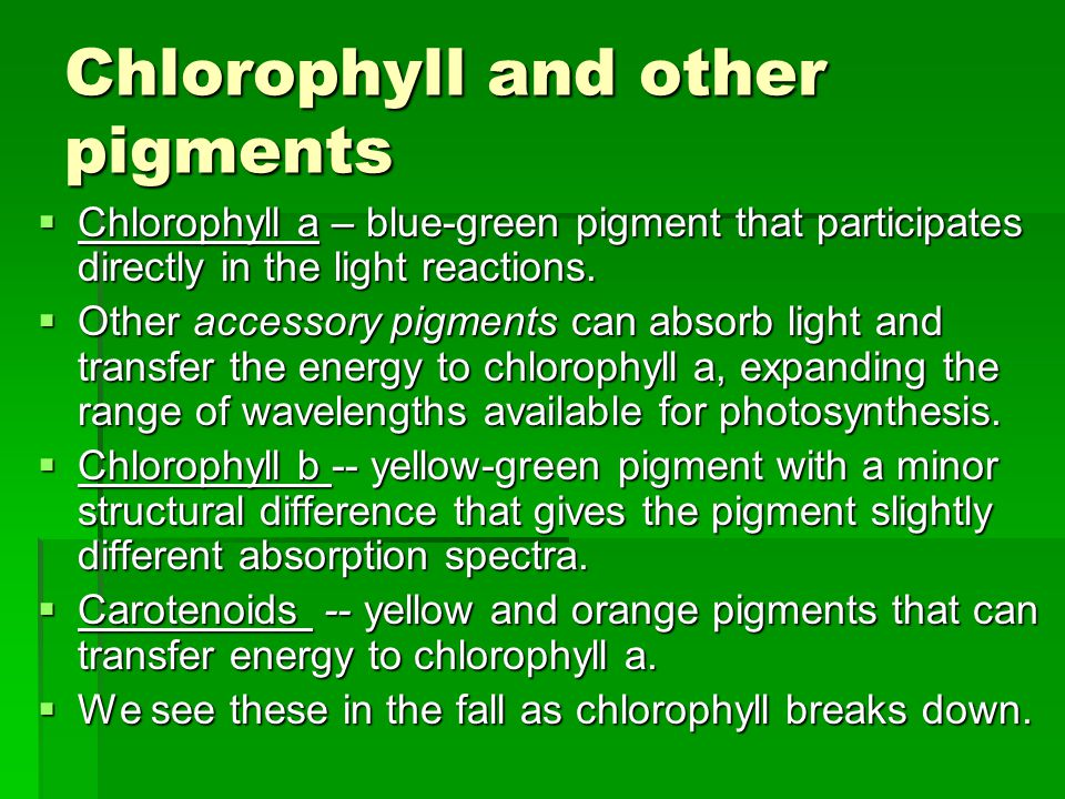 Part 1: The light-dependent reactions  Light excites electrons from P680 (reaction center chlorophyll in photosystem II).