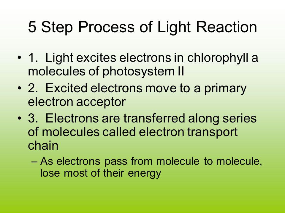 5 Step Process of Light Reaction 1.
