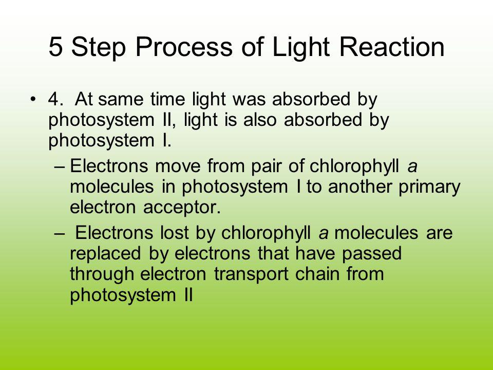 5 Step Process of Light Reaction 4.
