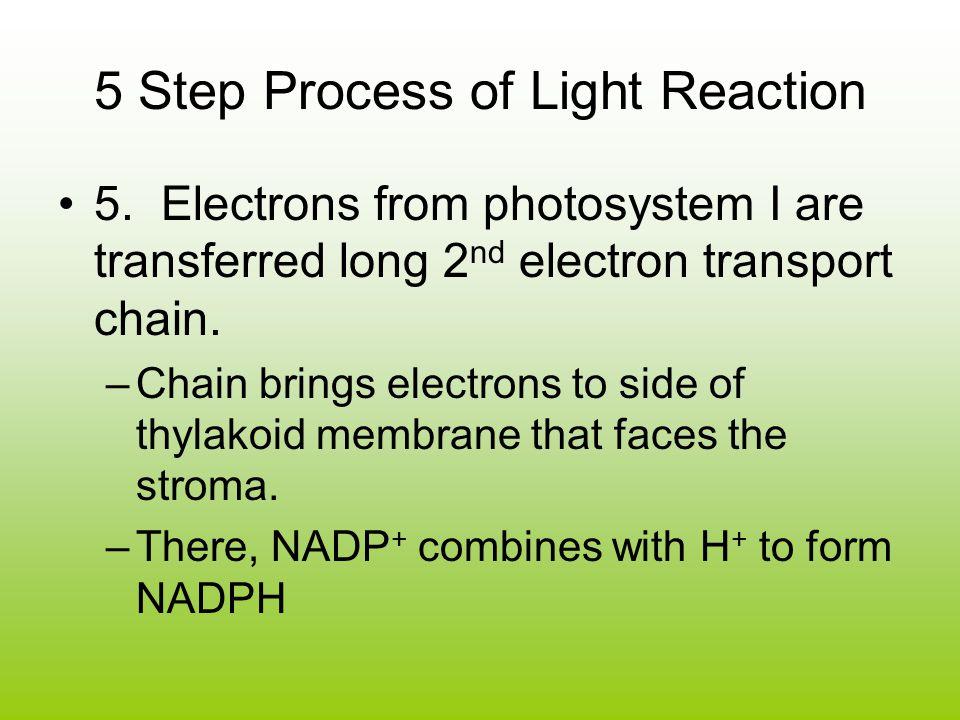 5 Step Process of Light Reaction 5.