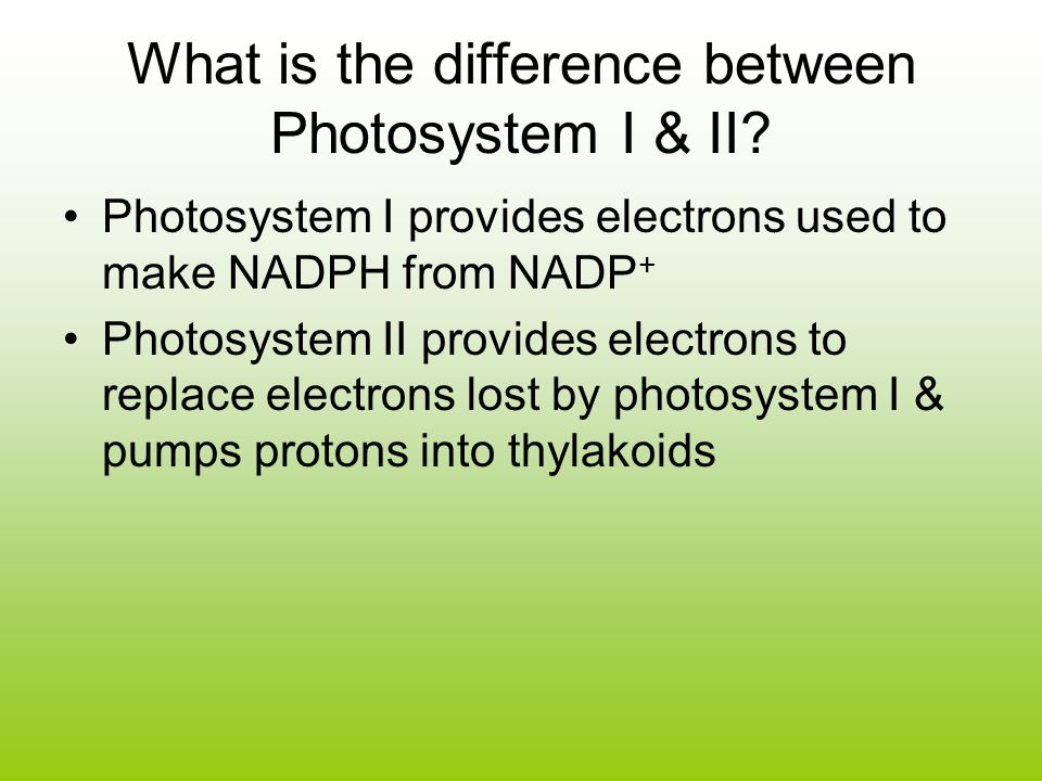 What is the difference between Photosystem I & II.
