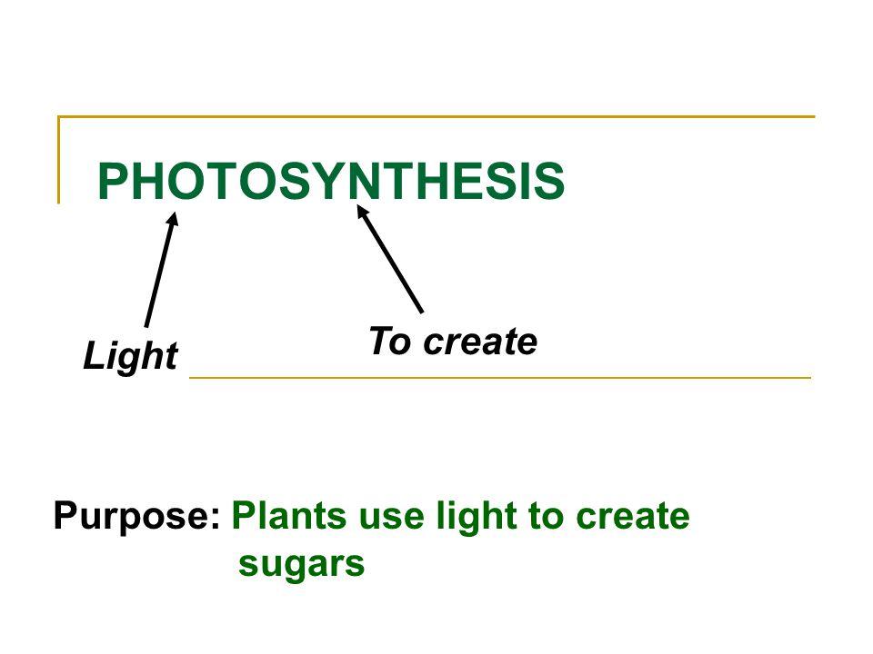 PHOTOSYNTHESIS Light To create Purpose: Plants use light to create sugars