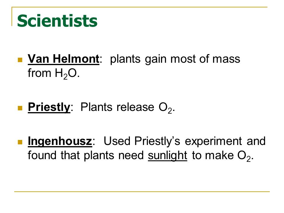 Which structure regulates gas exchange during the processes of photosynthesis and respiration.