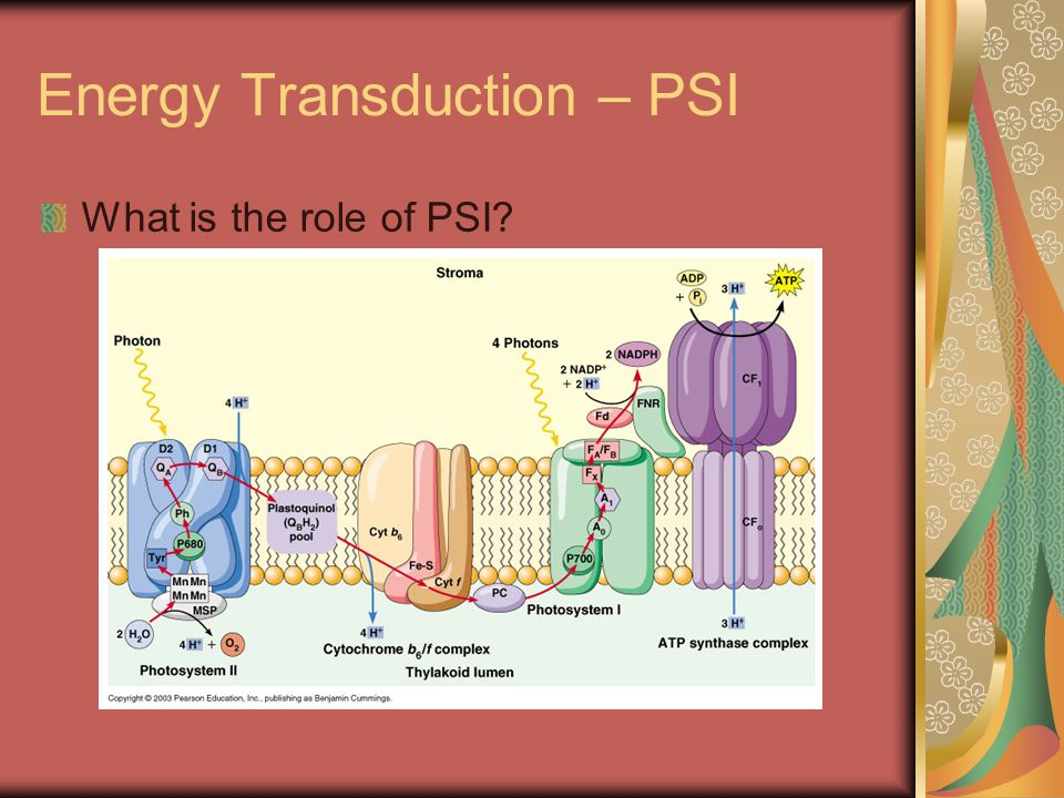 Energy Transduction – PSI What is the role of PSI