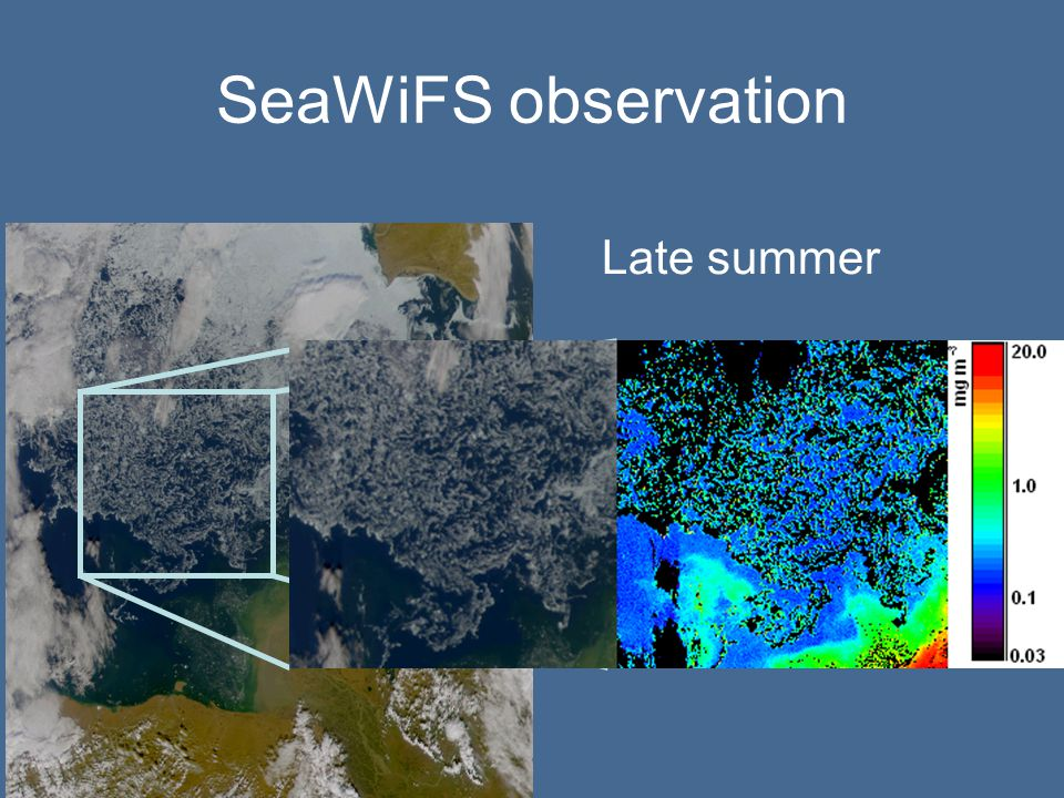 SeaWiFS observation Late summer