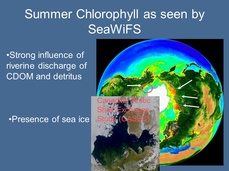 Summer Chlorophyll as seen by SeaWiFS Strong influence of riverine discharge of CDOM and detritus Presence of sea ice Canadian Arctic Shelf Exchange Study (CASES)