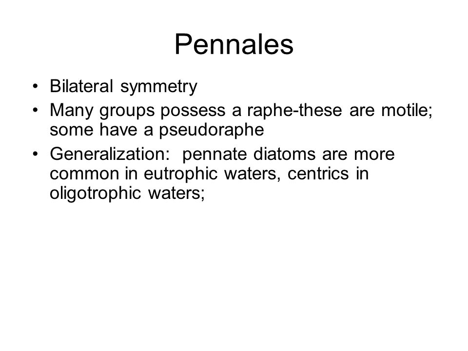 Pennales Bilateral symmetry Many groups possess a raphe-these are motile; some have a pseudoraphe Generalization: pennate diatoms are more common in e