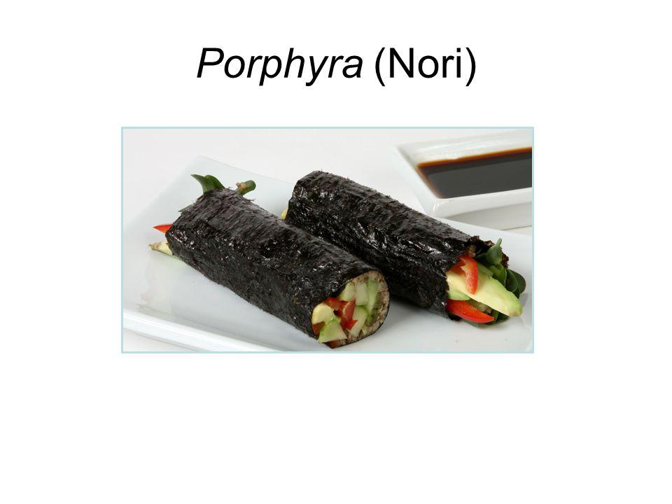 Porphyra (Nori)