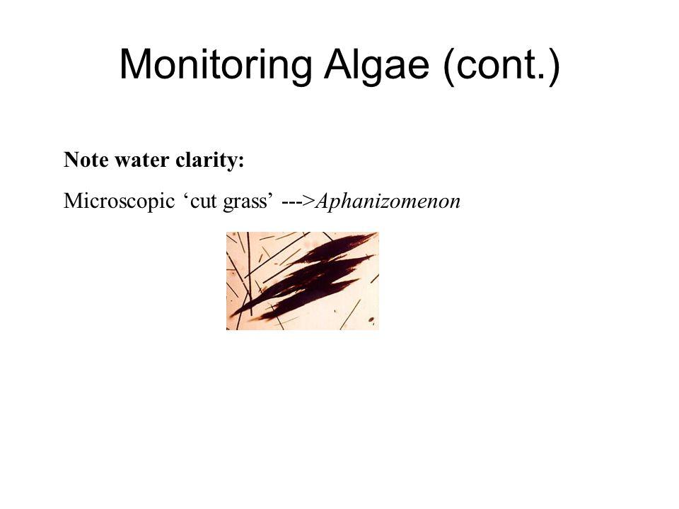 Note water clarity: Microscopic 'cut grass' --->Aphanizomenon Monitoring Algae (cont.)