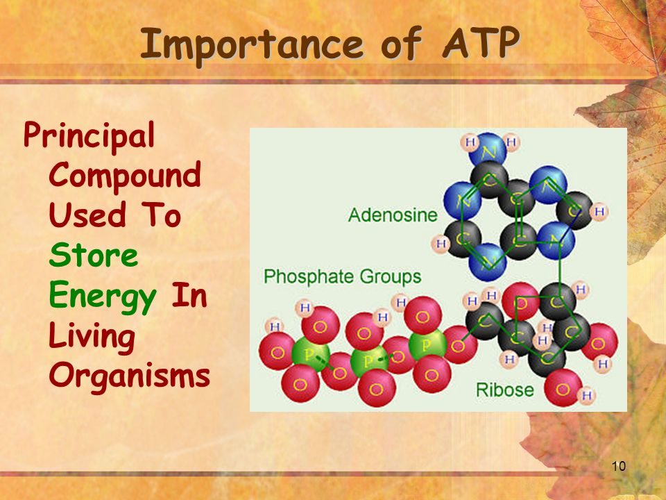 10 Importance of ATP Principal Compound Used To Store Energy In Living Organisms