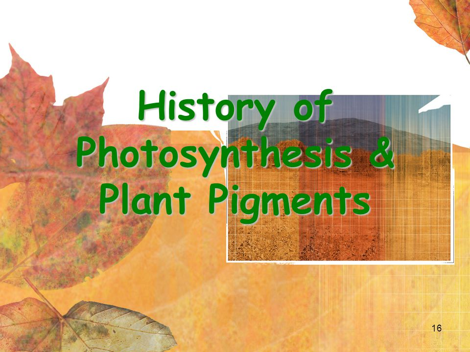 16 History of Photosynthesis & Plant Pigments