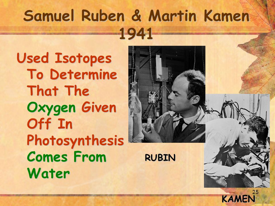 25 Samuel Ruben & Martin Kamen 1941 Used Isotopes To Determine That The Oxygen Given Off In Photosynthesis Comes From Water KAMEN RUBIN