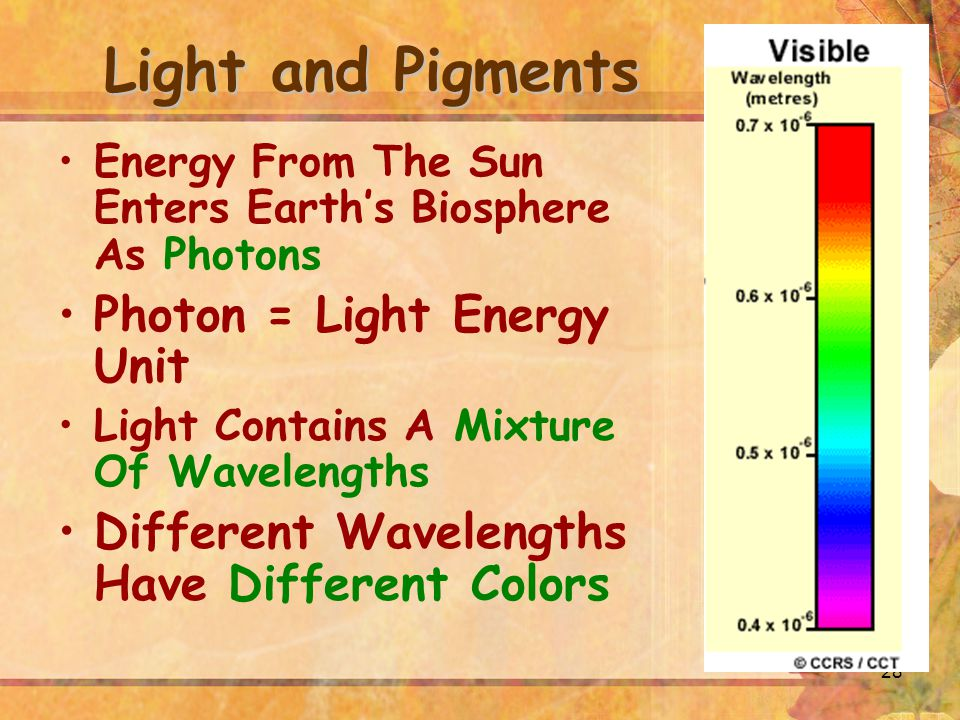 28 Light and Pigments Energy From The Sun Enters Earth's Biosphere As Photons Photon = Light Energy Unit Light Contains A Mixture Of Wavelengths Different Wavelengths Have Different Colors