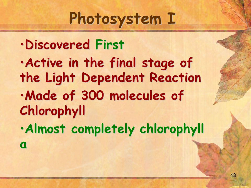 48 Photosystem I Discovered FirstDiscovered First Active in the final stage of the Light Dependent ReactionActive in the final stage of the Light Dependent Reaction Made of 300 molecules of ChlorophyllMade of 300 molecules of Chlorophyll Almost completely chlorophyll aAlmost completely chlorophyll a