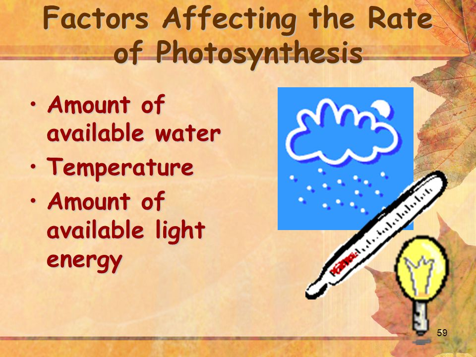 59 Factors Affecting the Rate of Photosynthesis Amount of available waterAmount of available water TemperatureTemperature Amount of available light energyAmount of available light energy