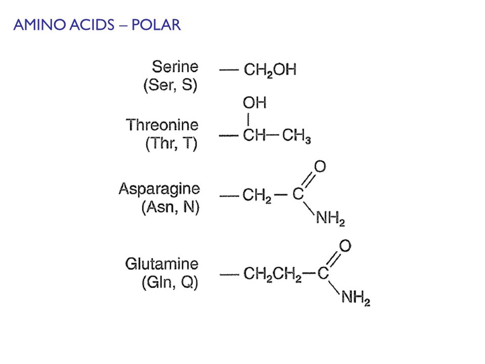 AMINO ACIDS – POLAR