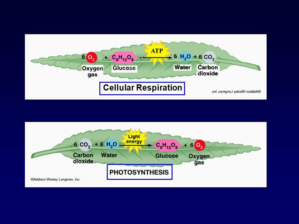 Chemiosmosis can make ATP
