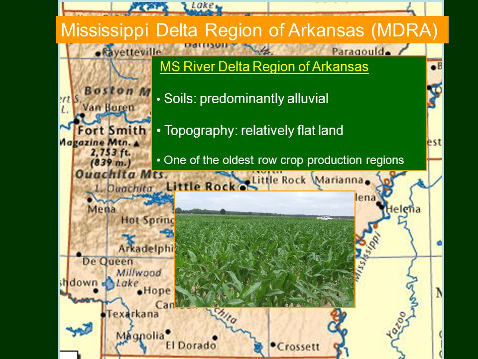 Mississippi Delta Region of Arkansas (MDRA) MS River Delta Region of Arkansas Soils: predominantly alluvial Topography: relatively flat land One of the oldest row crop production regions