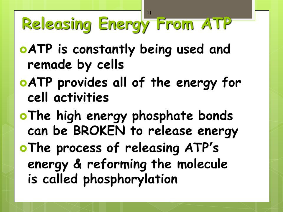 Releasing Energy From ATP  ATP is constantly being used and remade by cells  ATP provides all of the energy for cell activities  The high energy phosphate bonds can be BROKEN to release energy  The process of releasing ATP's energy & reforming the molecule is called phosphorylation 11