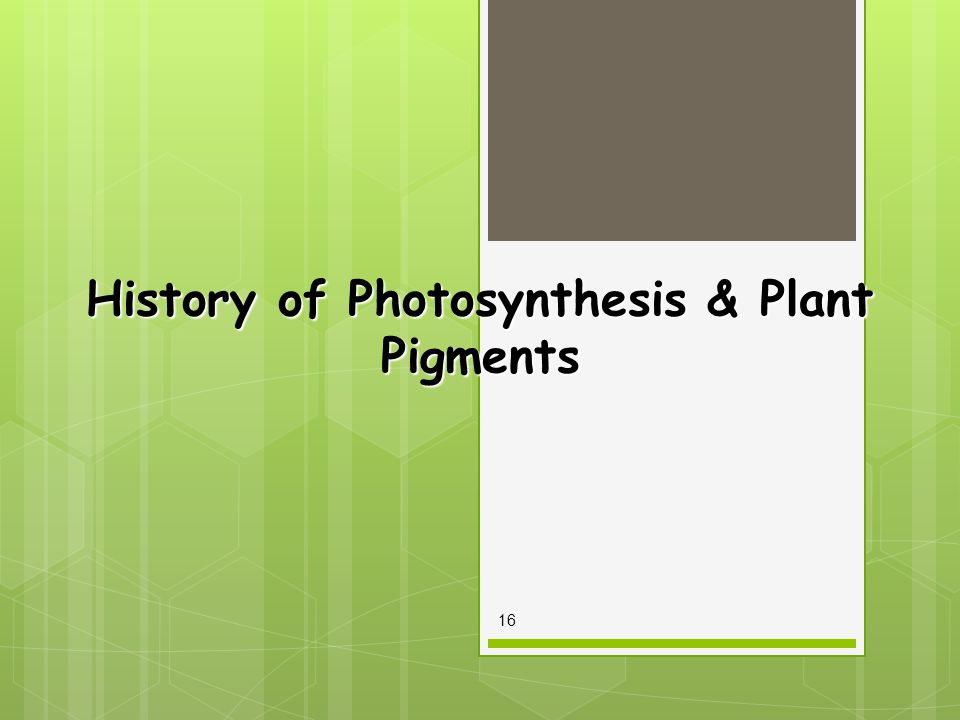History of Photosynthesis & Plant Pigments 16