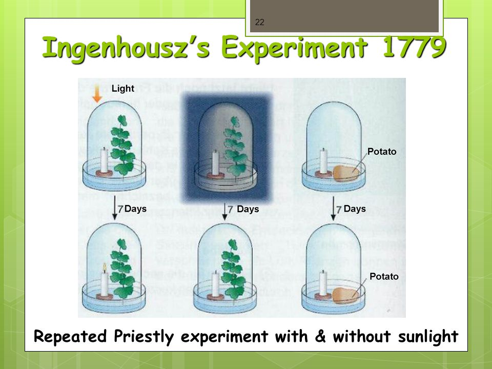 Ingenhousz's Experiment 1779 22 Repeated Priestly experiment with & without sunlight