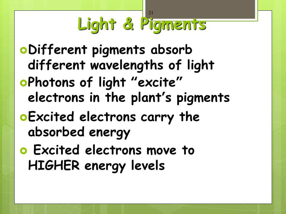 Light & Pigments  Different pigments absorb different wavelengths of light  Photons of light excite electrons in the plant's pigments  Excited electrons carry the absorbed energy  Excited electrons move to HIGHER energy levels 31