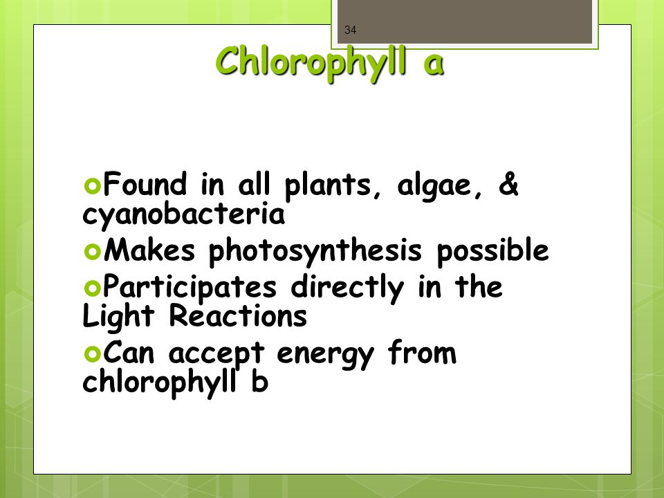 Chlorophyll a  Found in all plants, algae, & cyanobacteria  Makes photosynthesis possible  Participates directly in the Light Reactions  Can accept energy from chlorophyll b 34