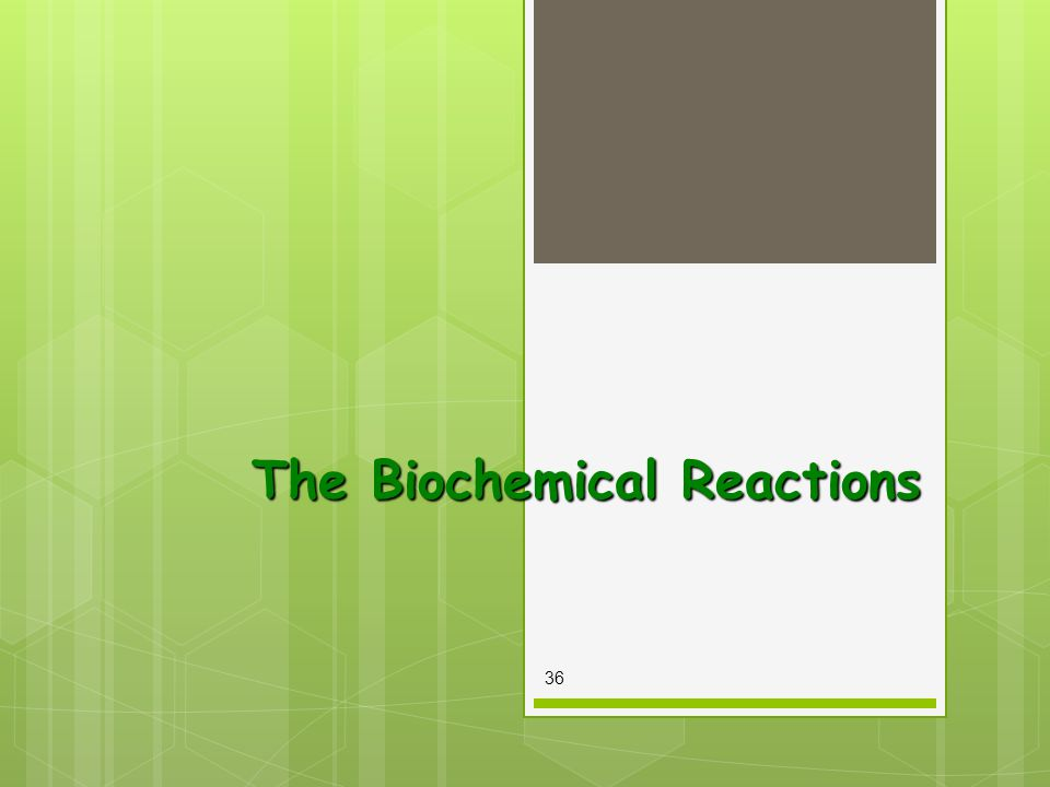 The Biochemical Reactions 36