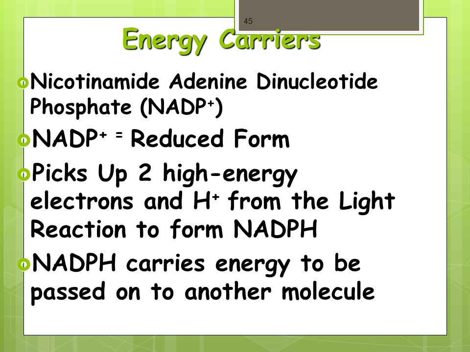 Energy Carriers  Nicotinamide Adenine Dinucleotide Phosphate (NADP + )  NADP + = Reduced Form  Picks Up 2 high-energy electrons and H + from the Light Reaction to form NADPH  NADPH carries energy to be passed on to another molecule 45