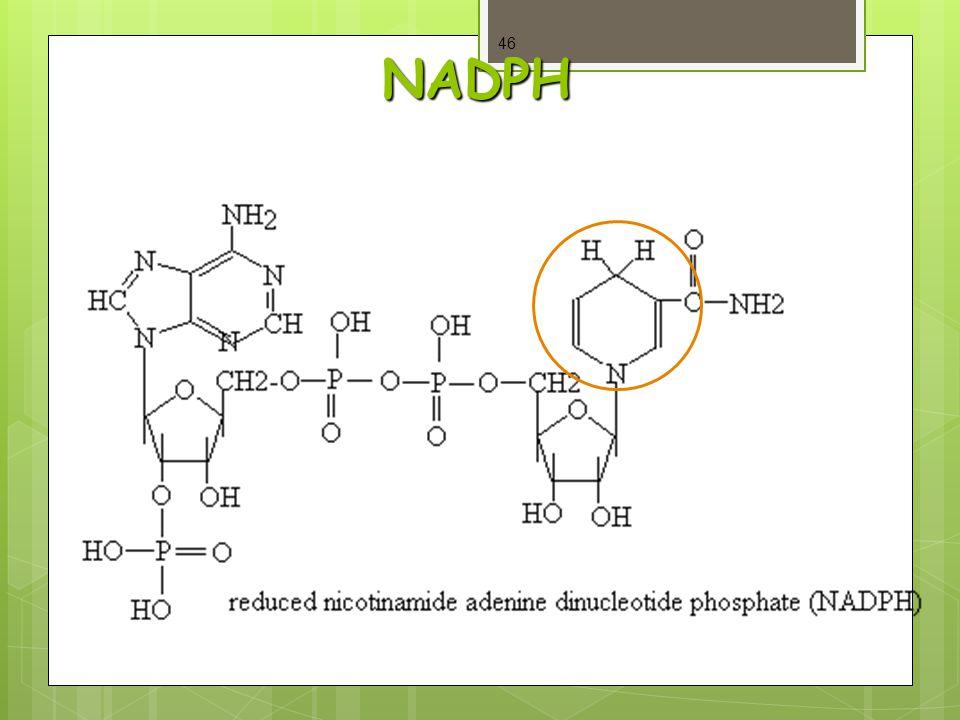 NADPH 46