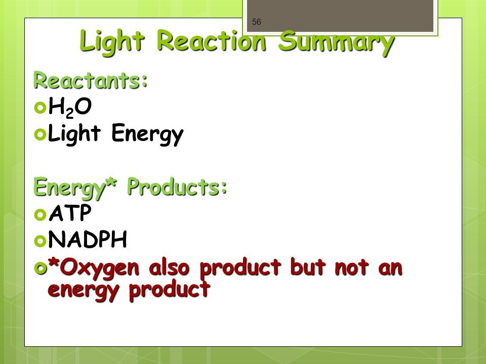 Light Reaction Summary Reactants: H2OH2OH2OH2O  Light Energy Energy* Products:  ATP  NADPH  *Oxygen also product but not an energy product 56
