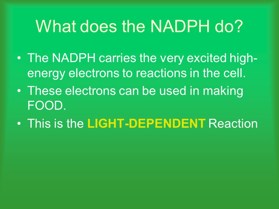 What does the NADPH do.