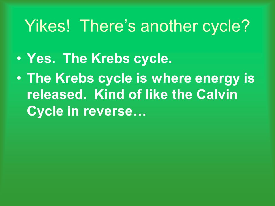 Yikes.There's another cycle. Yes. The Krebs cycle.