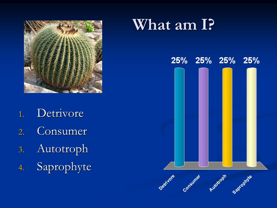 What am I 1. Detrivore 2. Consumer 3. Autotroph 4. Saprophyte