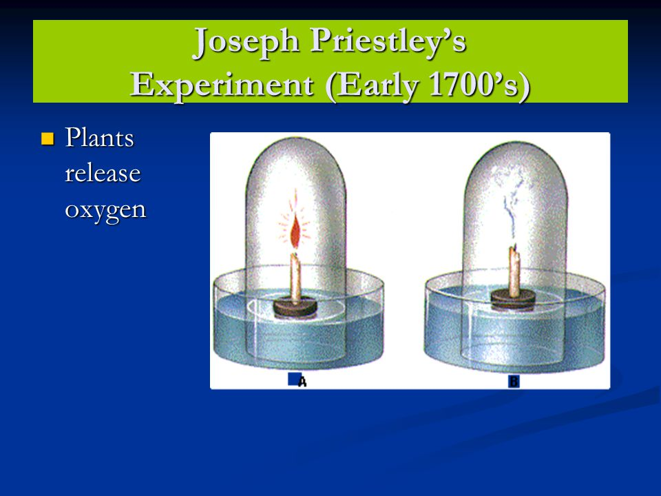 Joseph Priestley's Experiment (Early 1700's) Plants release oxygen Plants release oxygen