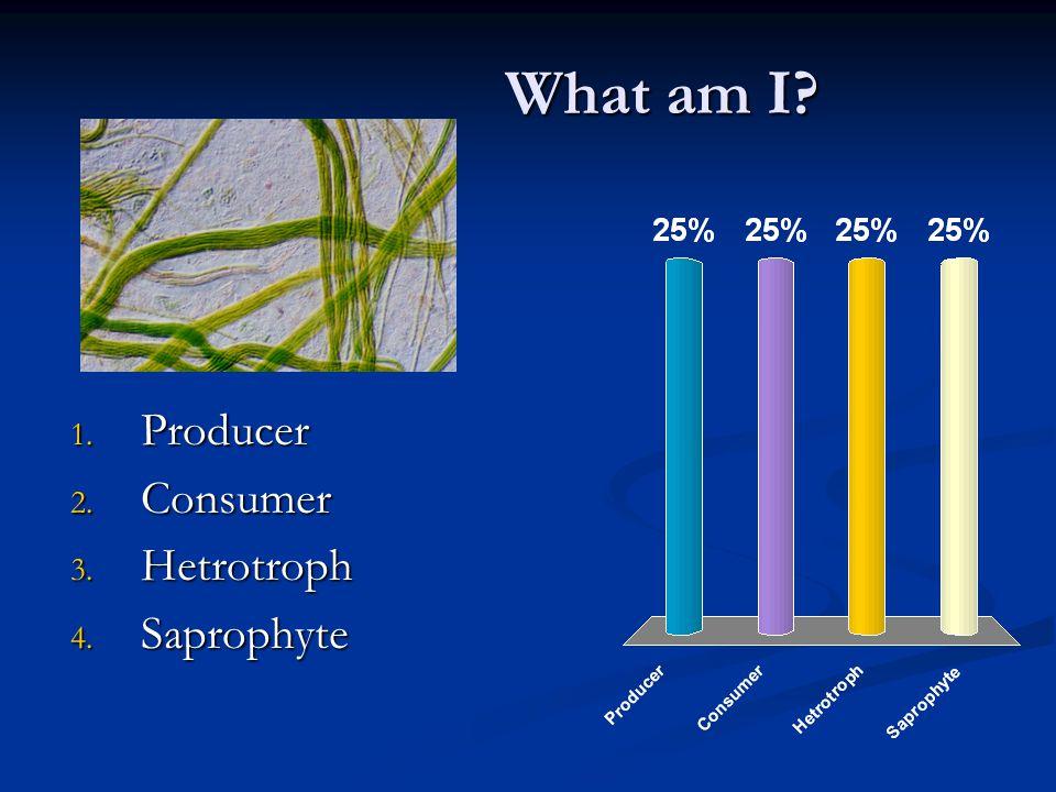 What am I? 1. Detrivore 2. Consumer 3. Autotroph 4. Saprophyte