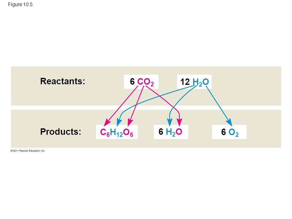 Figure 10.5 Reactants: Products: 6 CO 2 6 H 2 O 6 O 2 12 H 2 O C 6 H 12 O 6