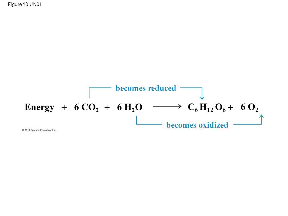 Figure 10.UN01 Energy  6 CO 2  6 H 2 O C 6 H 12 O 6  6 O 2 becomes reduced becomes oxidized