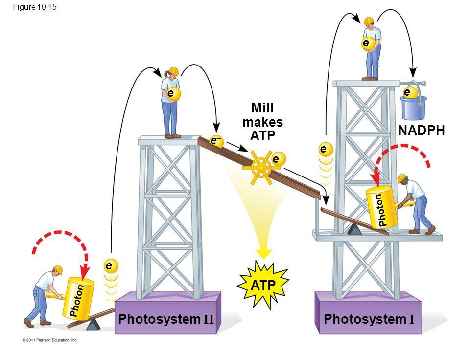 Photosystem II Photosystem I Mill makes ATP ATP NADPH ee ee ee ee ee ee ee Photon Figure 10.15