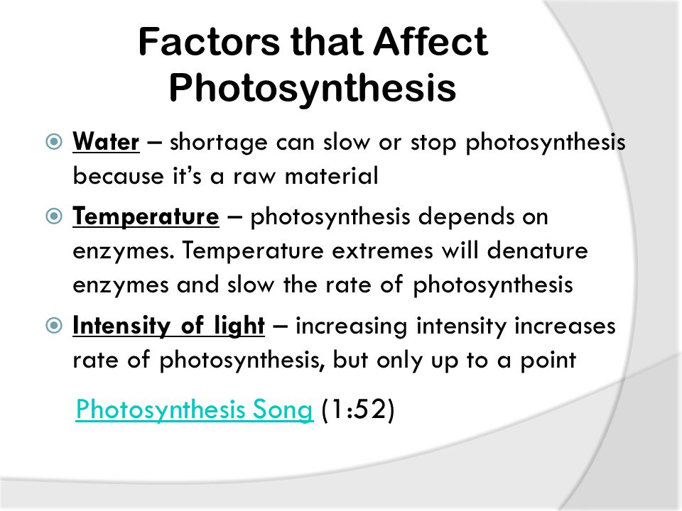 Factors that Affect Photosynthesis  Water – shortage can slow or stop photosynthesis because it's a raw material  Temperature – photosynthesis depends on enzymes.