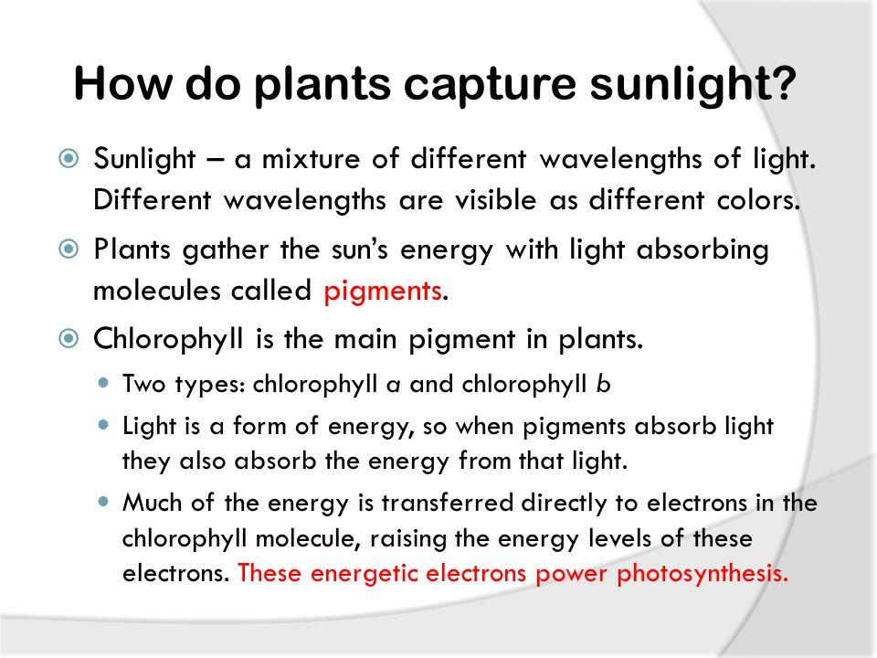 How do plants capture sunlight.  Sunlight – a mixture of different wavelengths of light.