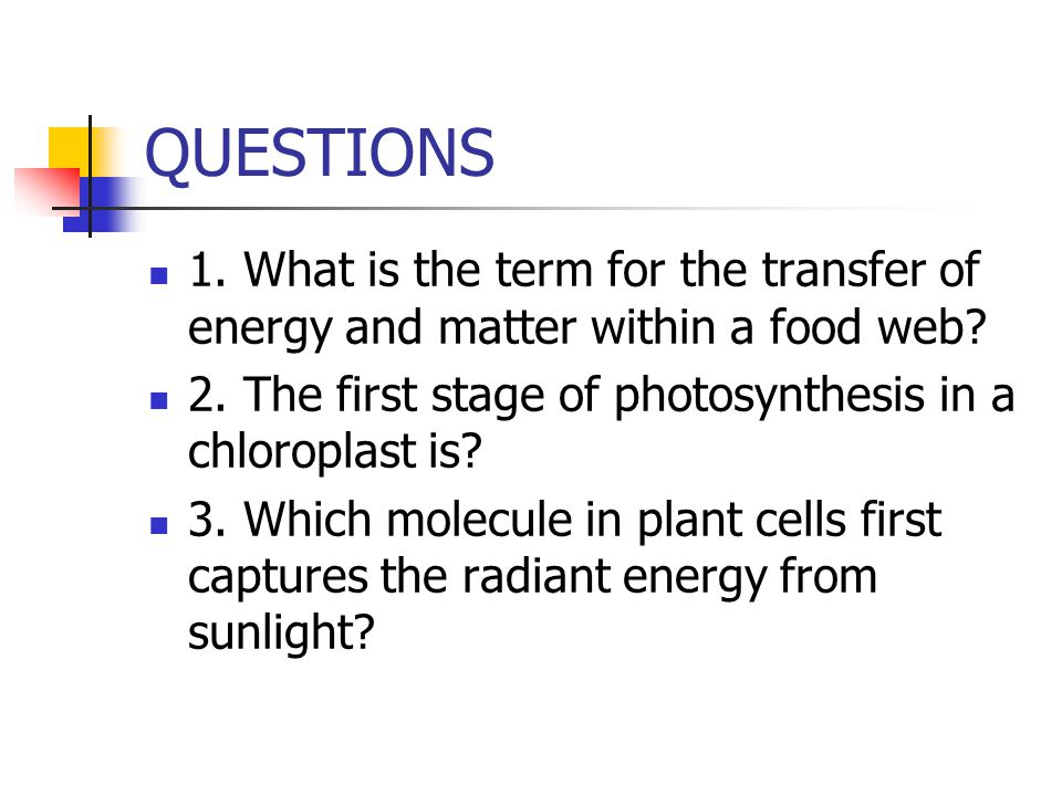 QUESTIONS 1. What is the term for the transfer of energy and matter within a food web? 2. The first stage of photosynthesis in a chloroplast is? 3. Wh