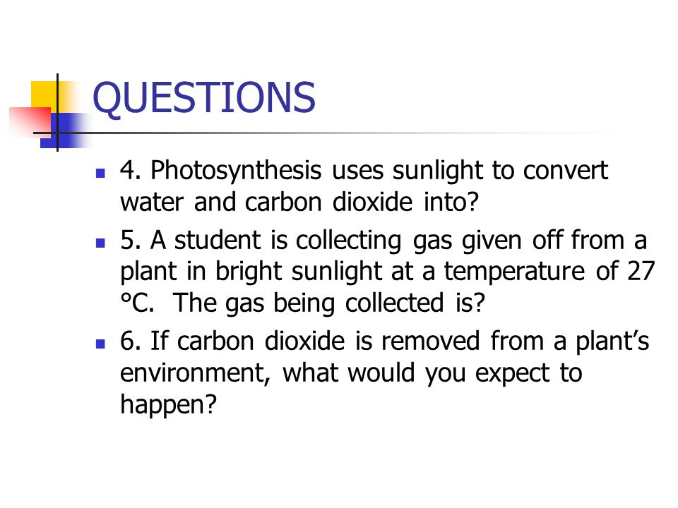 QUESTIONS 4. Photosynthesis uses sunlight to convert water and carbon dioxide into? 5. A student is collecting gas given off from a plant in bright su