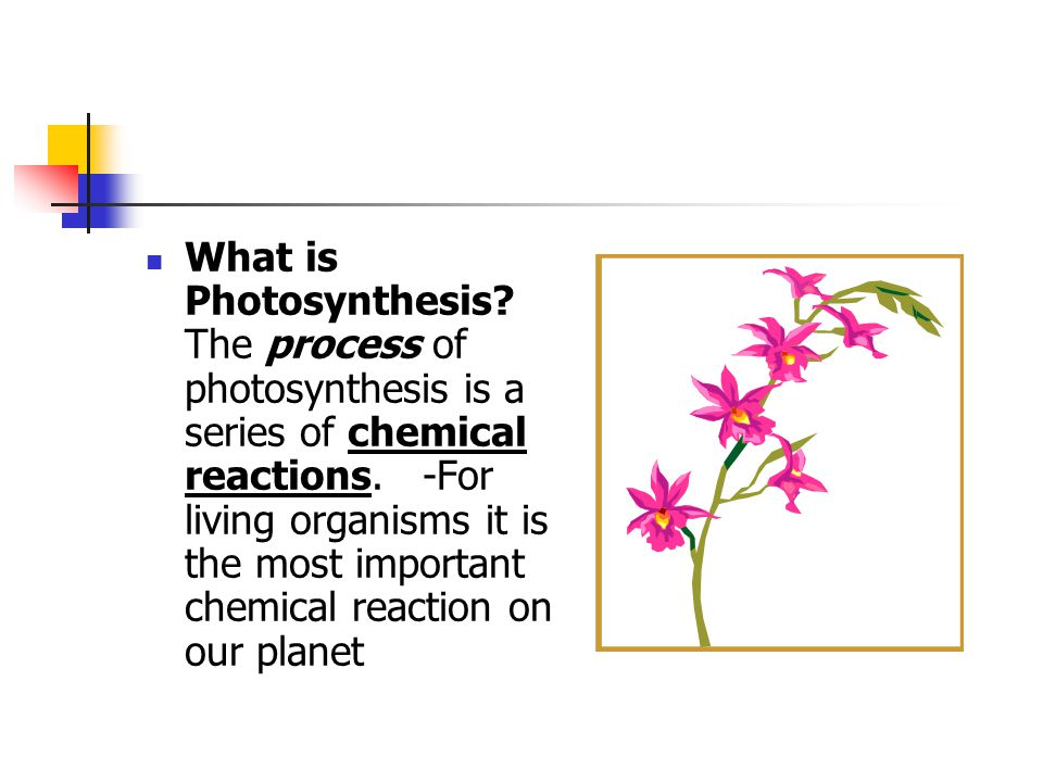 What is the equation for the chemical reaction for photosynthesis? chlorophyll enzymes