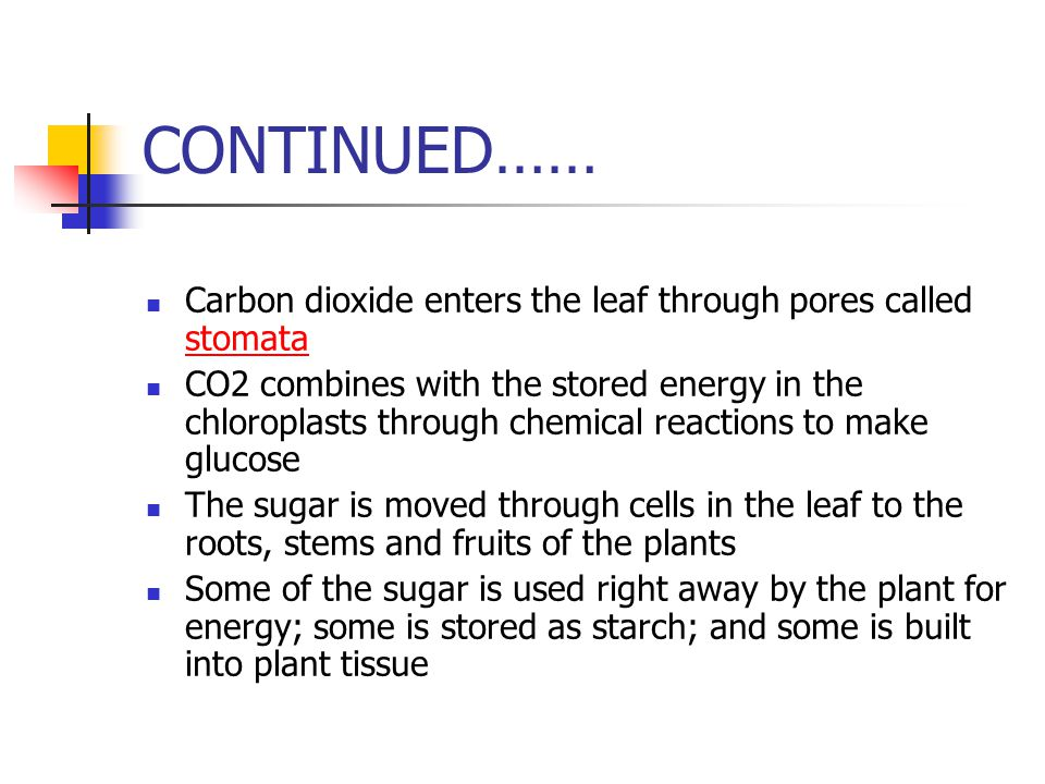 CONTINUED…… Carbon dioxide enters the leaf through pores called stomata stomata CO2 combines with the stored energy in the chloroplasts through chemic