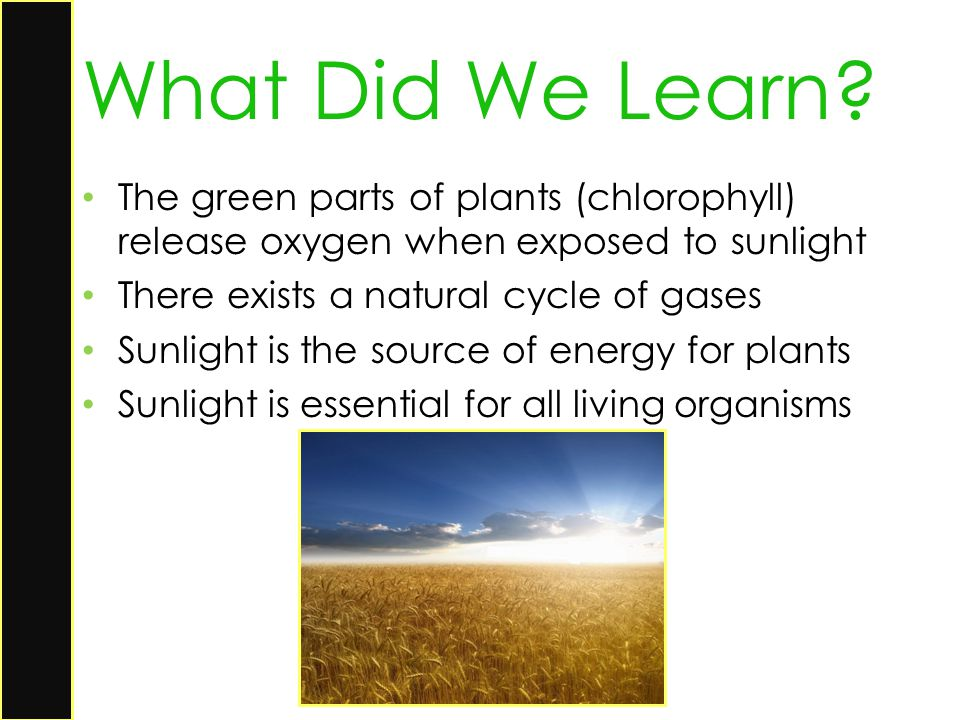 The green parts of plants (chlorophyll) release oxygen when exposed to sunlight There exists a natural cycle of gases Sunlight is the source of energy
